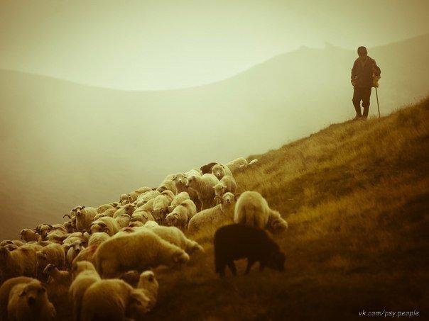 Путешественник спрашивает пастуха: — Какая сегодня будет погода? Пастух отвечает: — Такая, какая мне нравится. — Откуда вы знаете, что погода будет именно такая, какая вам нравится? — Осознав, что невозможно всегда получать то, что тебе нравится, я научился любить то, что будет. Поэтому я абсолютно уверен, что будет та погода, какая мне нравится...