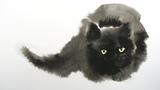 Watercolor Black Cat Tutorial - Wet in Wet technique