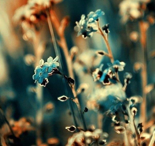 красота и нежность...