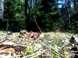 Это прелесть.)) Птенцы в лесу.