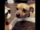 Осторожно! У нас дома очень добрая собака. Но только ни тогда, когда трогают ее еду...