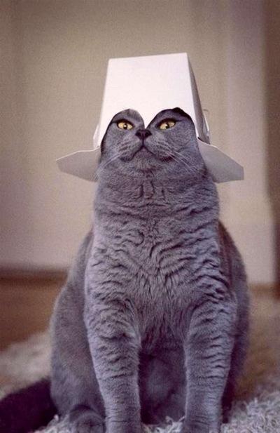 Mr Cat, 29 января 1955, Пермь, id187432749