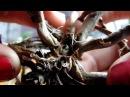 Не выбрасывайте пенечки орхидей