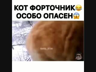 кот форточник особо опасен