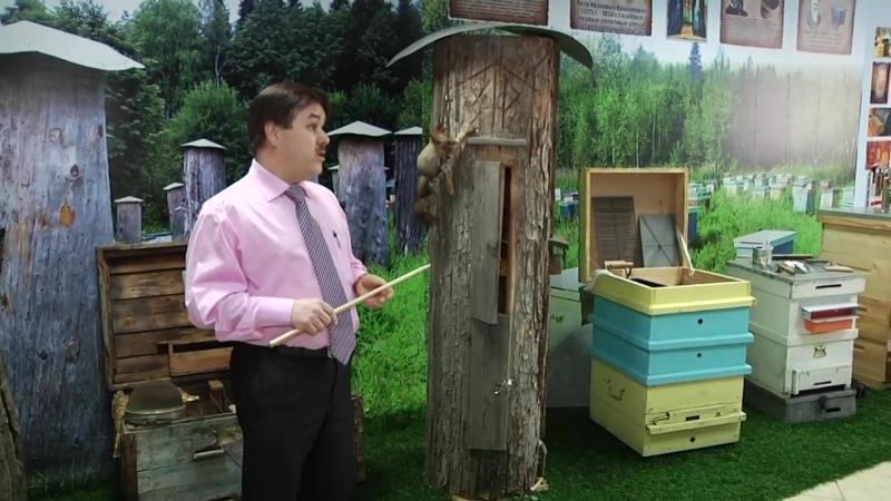 Музей пчёл в Кемерове