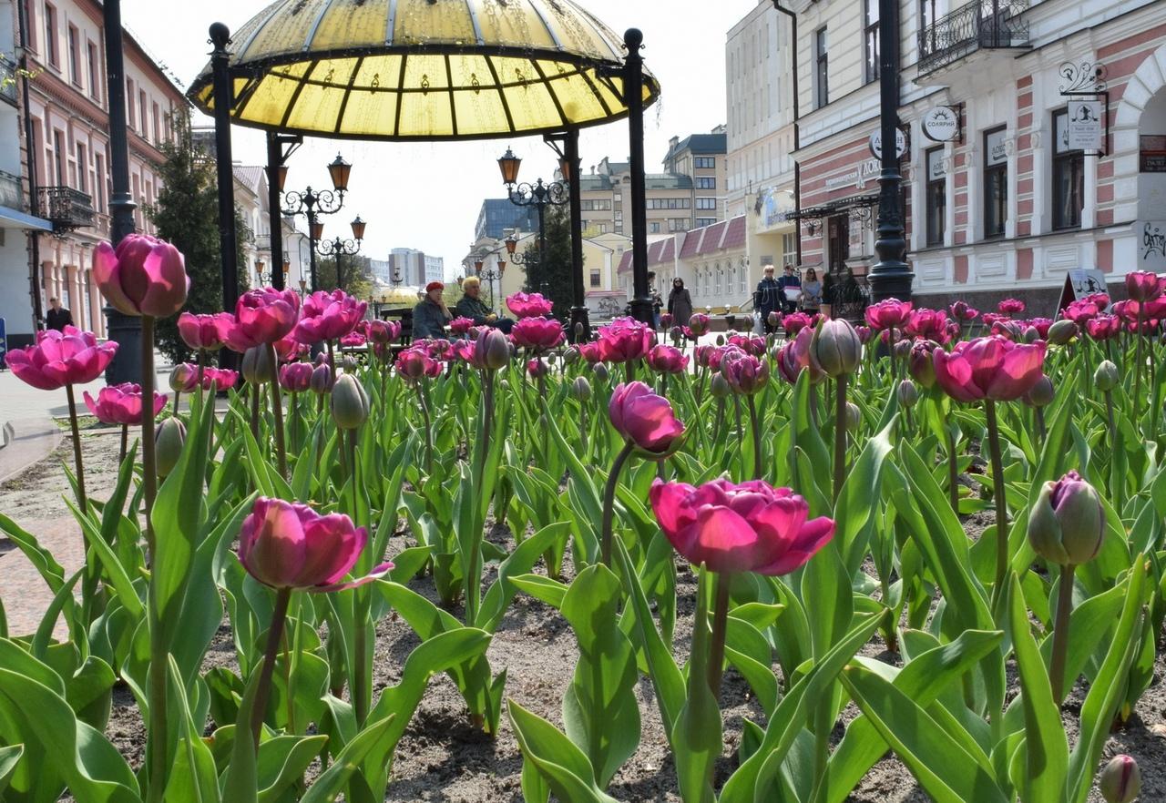Вслед за тюльпанами в Бресте высадят 30 тысяч роз