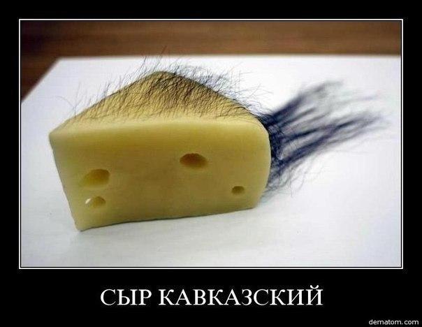сыр рисунок: