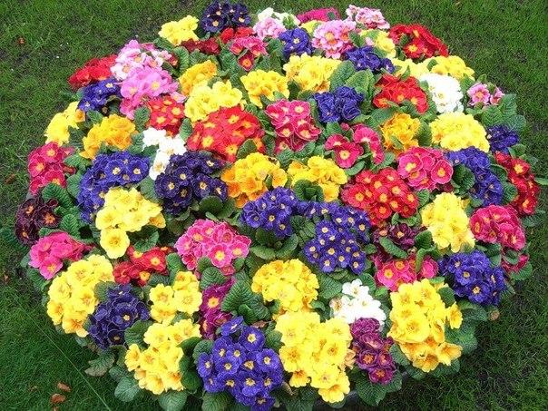 смотреть фото цветов на клумбах