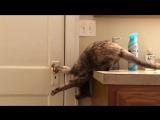 Кот показывает человеку, как открыть дверь