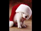 Adam Faith - Lonely Pup (In A Christmas Shop)