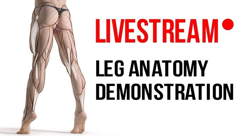 Proko Anatomy Livestream - Drawing the Hamstrings