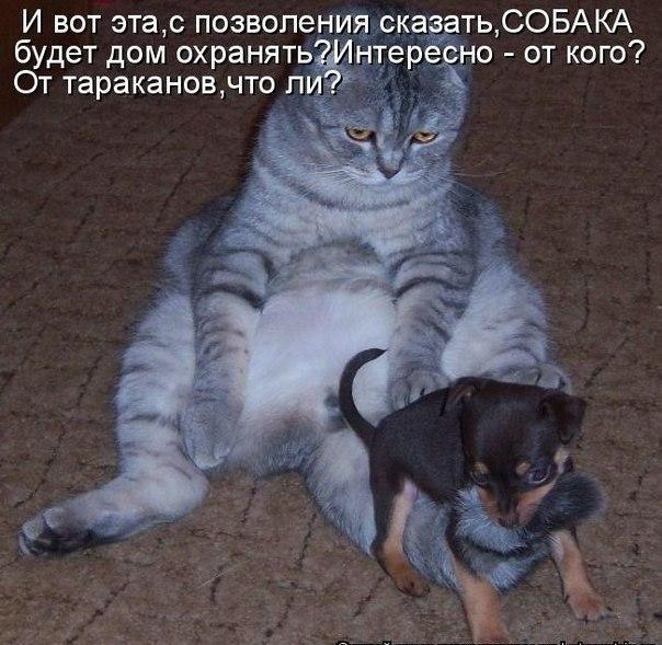 https://pp.vk.me/c7002/v7002853/f5ef/UnP4n0N7jTY.jpg