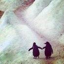 - Ты знал, что если пингвин находит себе пару, он остается с ней до конца жизни?