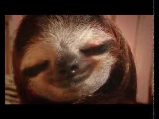 New Animal Planet Meet the Sloths series trailer (2013)