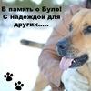 В память о Буле!Помощь животным в Беларуси!