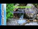 Видеоцитата из фильма Прекрасная зеленая: Про любовь и губную помаду