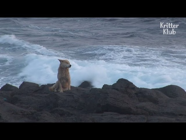 Stray Dog Never Leaves This Dangerous Location | Animal in Crisis EP1
