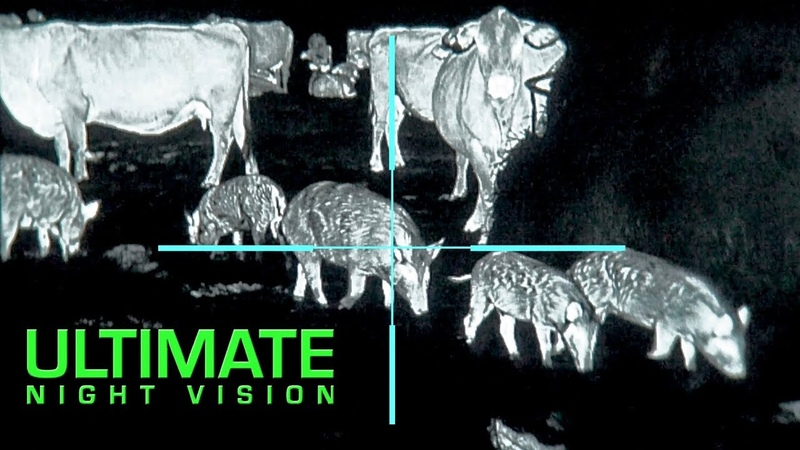 The Clearest Thermal Hunt Footage Ever | 25 Hogs and 10 Coyotes Down