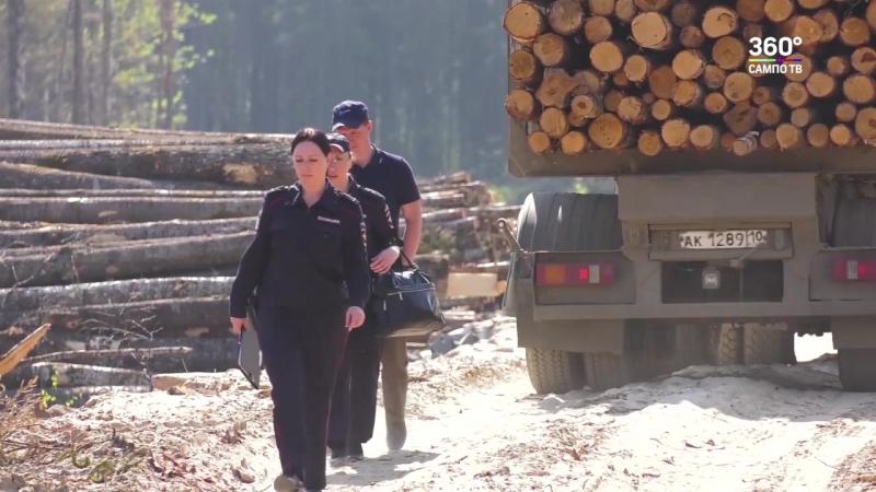Мэрия Петрозаводска подсчитывает ущерб от действий лесорубов на ул.Университетской
