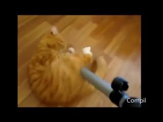 Пылесос ест котов