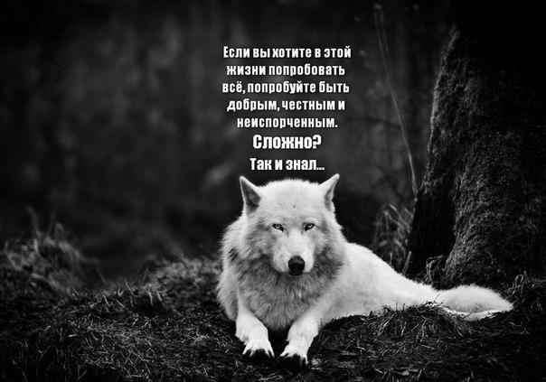 Будь волком не только в бою в