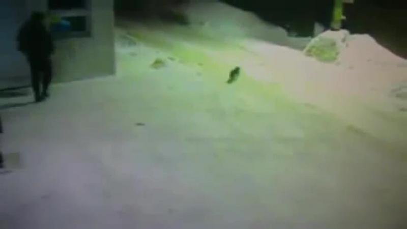 Охранник показал коту дорогу