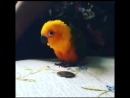 Смешные и Умные Птицы | Видео подборка приколов, приколы с птицами