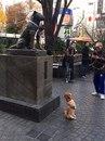 А это просто собака, которая позирует для своего хозяина напротив монумента…