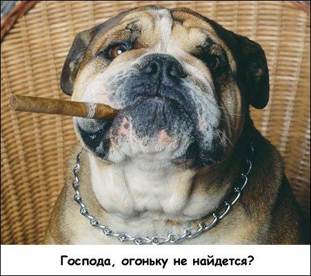 все породы собак от а до я: