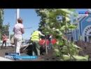 Аллея из лип и магнолий украсила привокзальную площадь Ставрополя Автор Анастасия Эпендиева