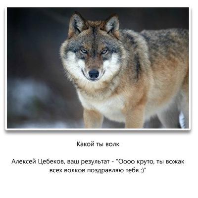 Никита Юрьевич, 3 июля , Элиста, id170357596