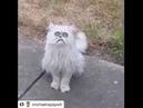 Michael Rapaport - This Stray Cat Looks Like Grandma