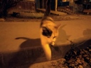 Павел Кочетов фотография #10