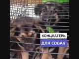 Концлагерь для собак в Подмосковье
