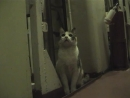Одна из многих кошек, служащая на подводных лодках. Машка!