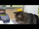 Приколы с котами и кошками для поднятия настроения! Подборка приколов и неудач со смешными котейками.mp4