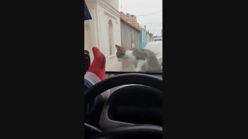Breaking your windshield in order to scare a cat