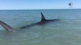 Акулы разбушевались Неделя акул 2018 на Discovery