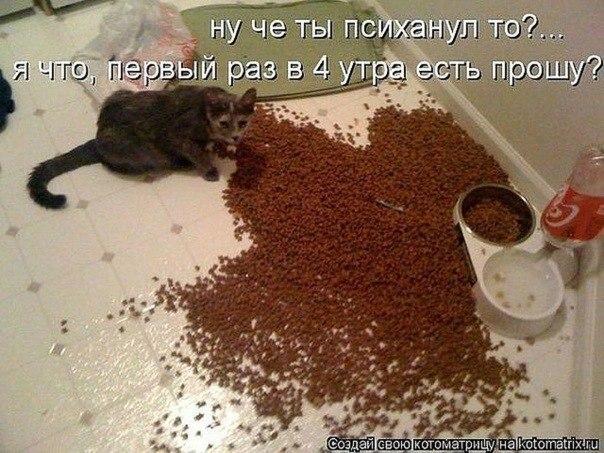РЕЛАКСАЦИЯ))))) - Страница 4 1j5vj90OQ60