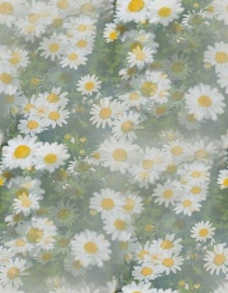 Цветочные и растительные фоны - Страница 2 Y1lypYFQcfs