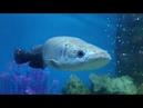 Sasha visit fish aquarium for kids Fun dance with Sharks Kids education video