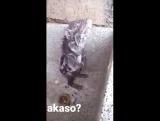 akaso: google- переводчик пишет, что на баскском значит - может быть. Графика или настоящее животное?