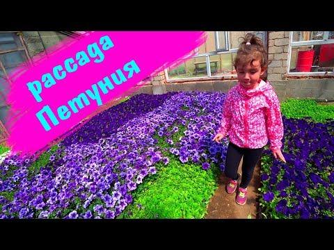 Рассада ЦВЕТОВ 🌺 Мы у бабушки в КАЗАХСТАНЕ / Едем за цветами в Рождественку! Цветы ПЕТУНИИ