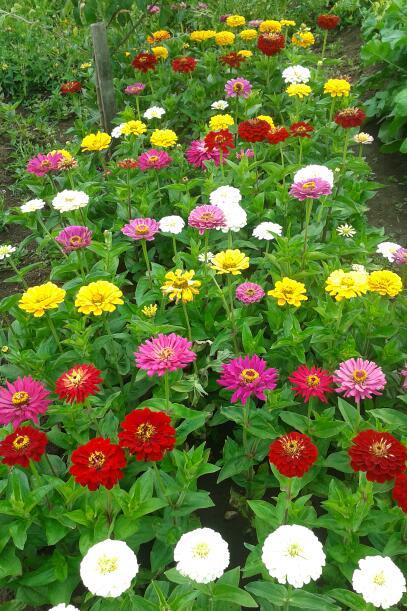 Цветы у Ликки JI7SZOCG2RI