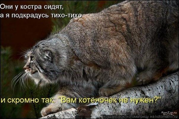 http://cs309419.vk.me/v309419273/c520/eYq_clHyx9M.jpg