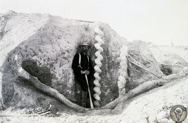 Штопор Дьявола В середине 1800-х годов владельцы ранчо в округе Сиу возле реки Найобрэра, штат Небраска, обнаружили необычные подземные образования. Они представляли собой спиралевидные