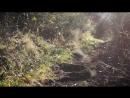 DESCENTE EN CANI-VTT _ Bikejoring downhill _ Husky Meilo Cani-VTT 4K