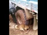 Собака хороший друг и помощник 😁👍