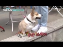Sub Esp ParkJungMin _ Great Gatsby - Episodio 1_5 박정민6 online-video-cutter 1