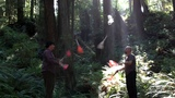 Club passing in the Redwood Forests with my brother George Wood